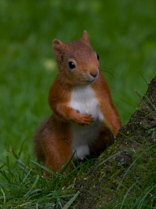 Muirhead Red Squirrel Sanctuary, Dundee